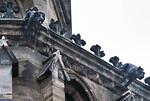 Magdeburg, Dom. Chor: Wasserspeier wasserspeiend